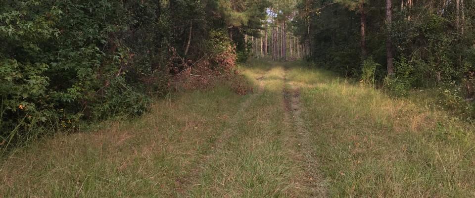Lands of the Carolinas